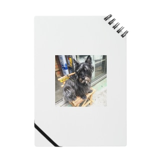 犬 Notes