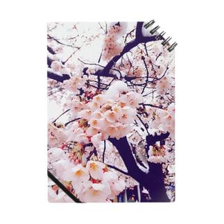 雪桜1 Notes