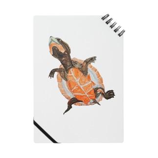 ニシキマゲクビガメ Notebook