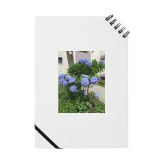 紫陽花 Notes