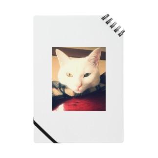 白猫ぎんくん Notes