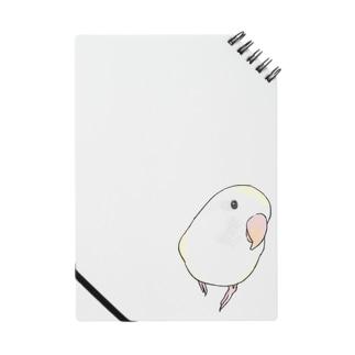 コザクラインコ バイオレットパイドちゃん【まめるりはことり】 Notes
