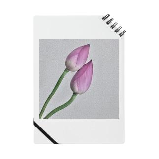 蓮の花 Notes