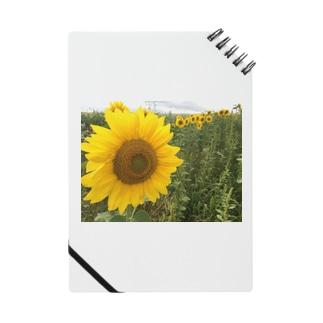 八月のひまわり Notes