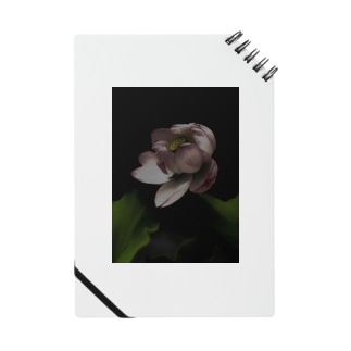 dark flower -hs- Notes