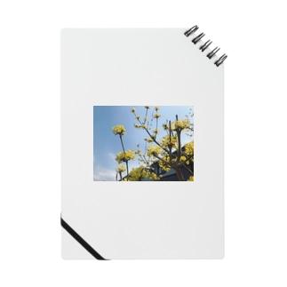 黄色い花 Notes