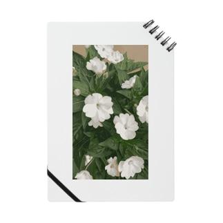 Whiteflower Notes