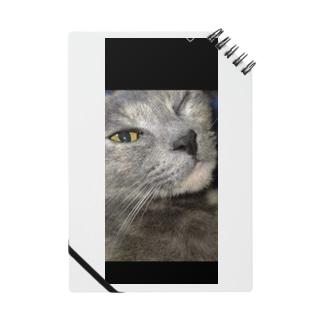 ウィンク猫 Notes