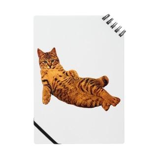 Elegant Cat ① Notes