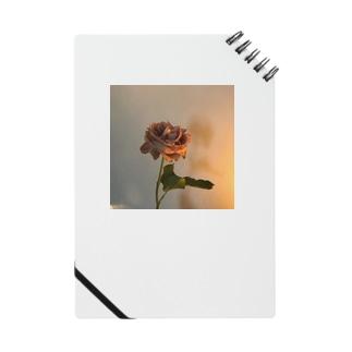 最後の薔薇 Notes