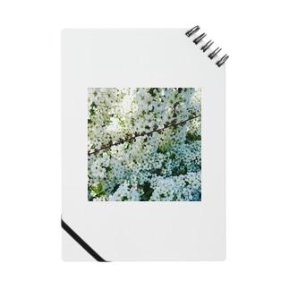 たもつのしろい花の陰にかくれて Notes