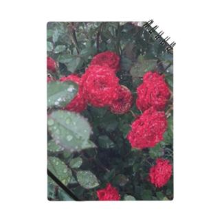赤いお花 Notes