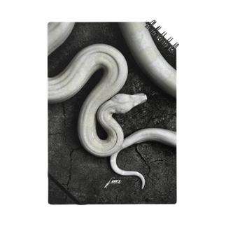 Boa constrictor Notes