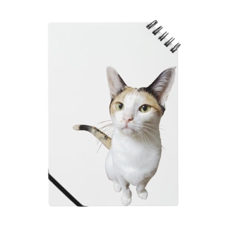 三毛猫のなつめちゃん Notes