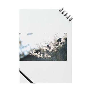 秋霞(akigasumi) Notes