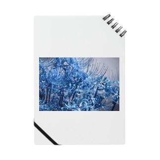 青い彼岸花 Notes