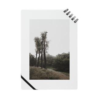 四本樹 Notes