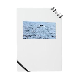 クジラの尾びれ Notes