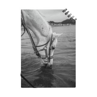 白い馬 ビーチ 白黒写真 Notebook