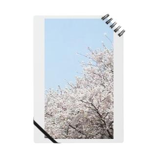 桜 Notebook