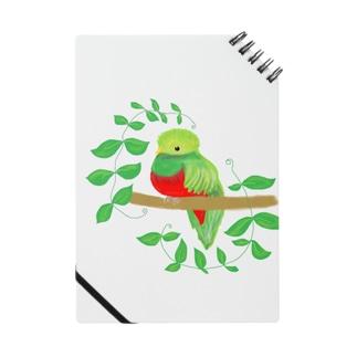 南国の島のケツァールっていう鳥さん Notes