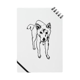 柴犬『まなざし』 Notes