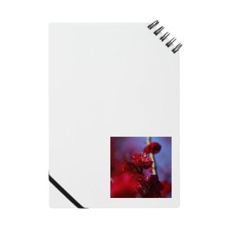 赤い梅(写真) Notes