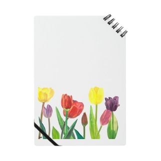 Tulips Notes