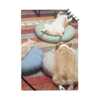 あやしい儀式をする犬と猫 Notes