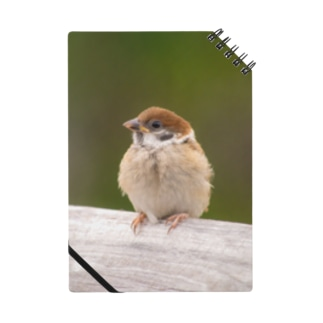スズメの幼鳥さん Notes