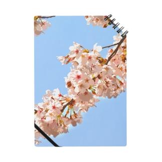 咲く  ~桜~  3 Notes