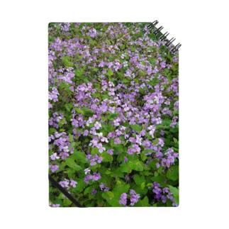 紫のお花 Notes
