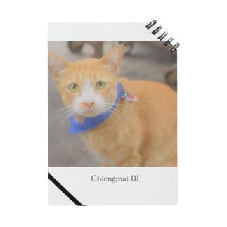 Chiengmai 01 / cat Notes