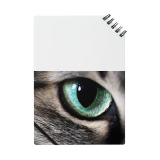 猫眼 Notes