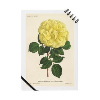 ベルギーのバラ ノート