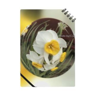 光景 sight735 水仙 花 FLOWERS  宙玉(そらたま) Notes