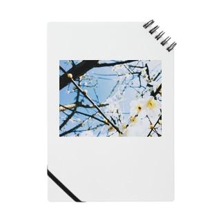 梅の花 Notes