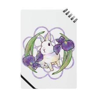 ウサギと菖蒲 Notes
