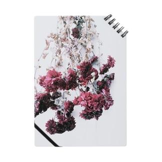寒菊 Notes