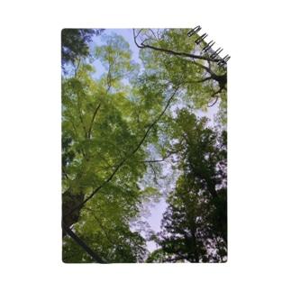 新緑の隙間 Notes