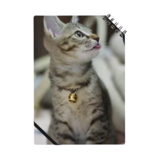 子猫ひなた Notes