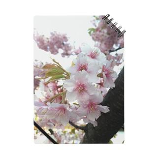 桜の桜 Notes