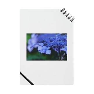 濃い色紫陽花 Notes