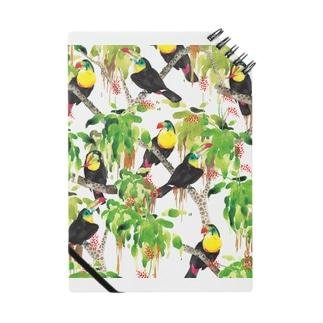 鳥(サンショクキムネオオハシ) Notes