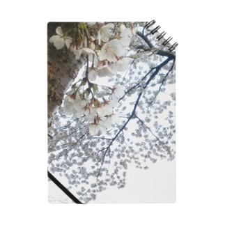 白い桜 Notes