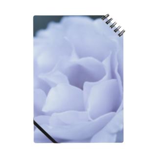 白バラ Notebook