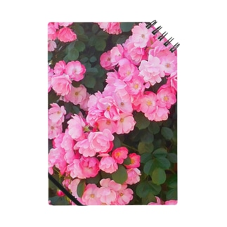 ピンクの薔薇いっぱい Notes