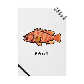 脂身通信Zの【魚シリーズ】アカハタ♪2107 Notes