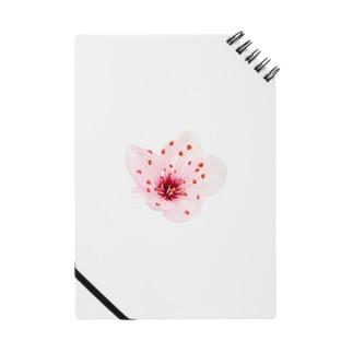 桜 / sakura Notes
