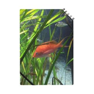 赤い魚 ノート